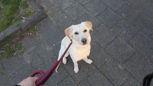 Dog's Best Friend - hondentraining gehoorzaamheids cursus