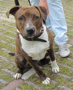 Overenthousiast naar andere honden - hondentraining